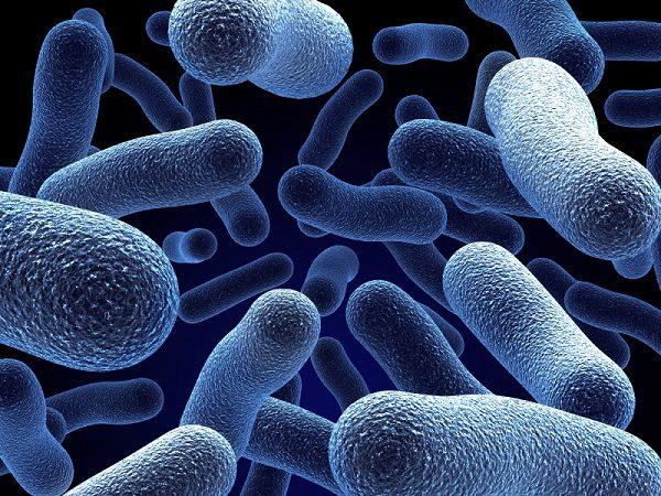 Внешнее строение микроорганизмов для выгребных ям